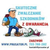 Prusator.pl Dezynfekcja